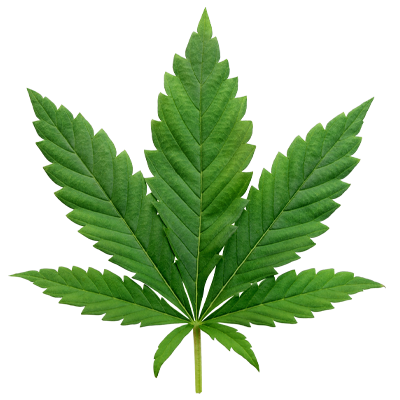 Solutions for cannabis labs