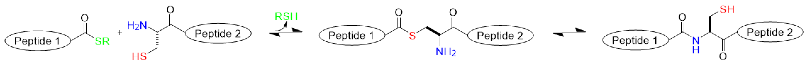 Synthesis of C-Terminus MEGA-Linked Peptides